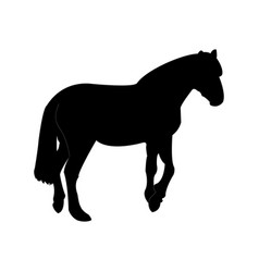 silhouette of the horse template vector image