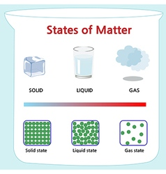 States of matter vector image