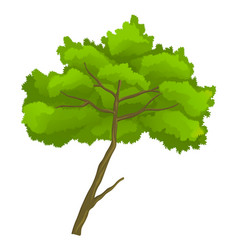 Cartoon green tree isolated at vector