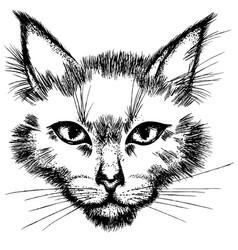 Cat face black vector
