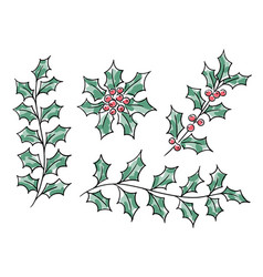 Christmas holly branches vector