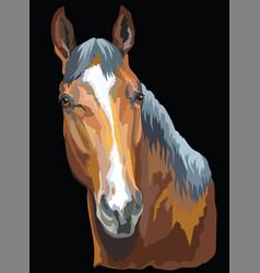 Colored horse portrait-5 vector