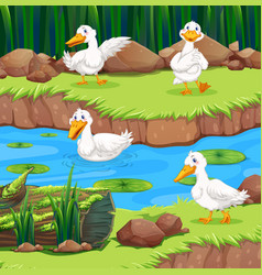 Four ducks in the river vector