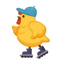Plump chicken in blue cap on walk in roller-skates vector