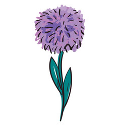 purple aster flower color on white background vector image