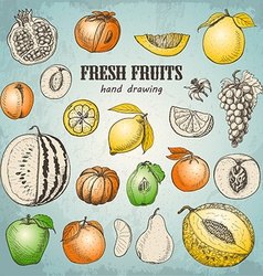 Set of fresh fruits in sketch style vector image