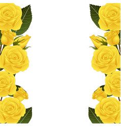 yellow rose flower border vector image