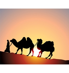 camels and bedouin vector image