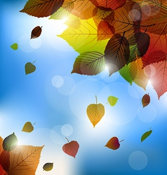 Autumn leafs background- fall with back ligh vector