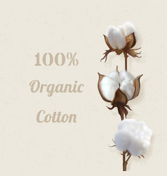 Branch of cotton plant in flower vector