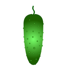 fresh cucumber vegetable isolated icon vector image
