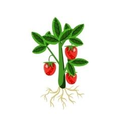 Fresh Strawberry Primitive Realistic vector