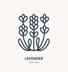 Lavender flower flat line icon medicinal plant vector