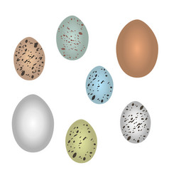 Set of bird eggs vector