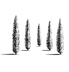 set of cypresses vector image