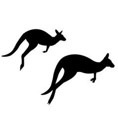 Two kangaroo vector