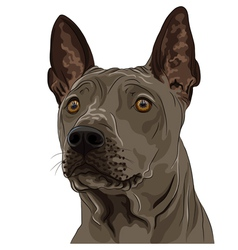 thai ridgeback dog breed vector image vector image