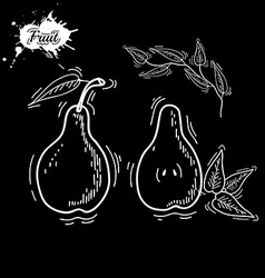 White pear vector image