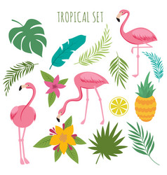 Tropical set with pink flamingos palm vector