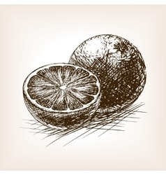 Orange citrus fruit sketch vector image vector image