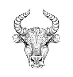 happy new year 2021 ox ox-taurus linear vector image