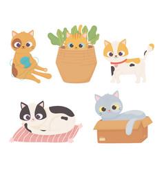 pet cats wool ball cardboard box cushion basket vector image