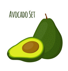 avocado whole and slice tropical summer fruit vector image vector image