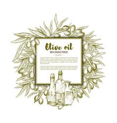 olive oil sketch poster vector image