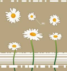 Chamomile flowers vector