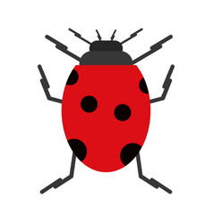 ladybug insect nature icon vector image