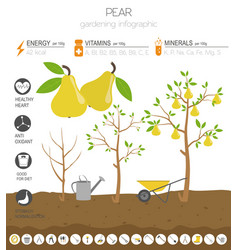 pear beneficial features graphic template vector image