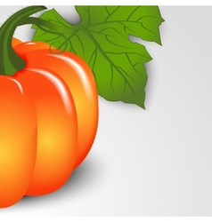 pumpkins backdrop vector image