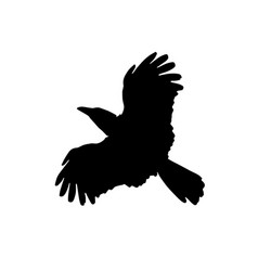 raven isolated silhouette vector image