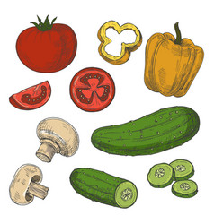 sketched tomatoes cucumbers mushrooms and sweet vector image