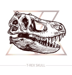 Dinosaur Skull Drawing Of T Rex Skull vector image