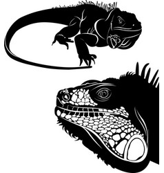 lizard iguana set silhouettes vector image