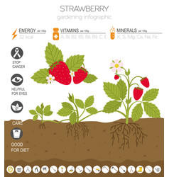 Strawberry beneficial features graphic template vector