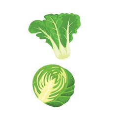 Cabbage and vegetables vector