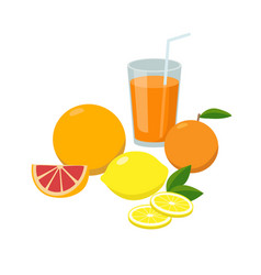 group fresh citrus fruits and orange juice vector image