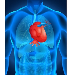 Heart disease diagram in human vector image
