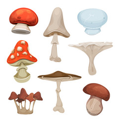 Mushrooms set vector
