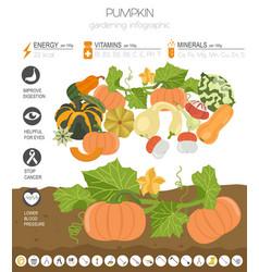 Pumpkin beneficial features graphic template vector