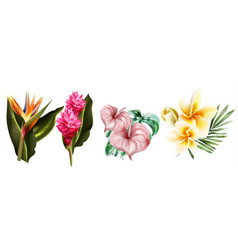 tropic flowers set collection watercolor vector image