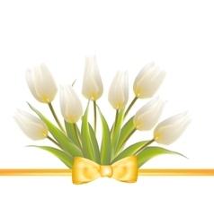 White tulip spring flowers vector image