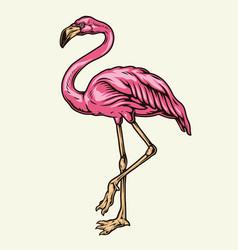 beautiful pink flamingo vector image
