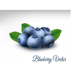 blueberry with leaves vector image