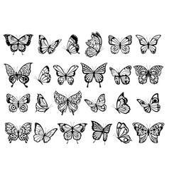 butterfly collection beautiful nature flying vector image