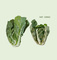 baby cabbage hand drawn vegetables isolated vector image
