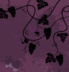 Bunch of grapes plant background vector image vector image