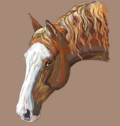 colorful horse portrait-4 vector image